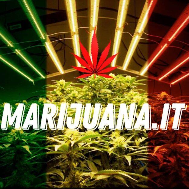 Marijuana.it